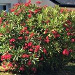 Jardin fleurie entourée d'un parc paysagé de 2300 m2 à la villa Groix en bretagne