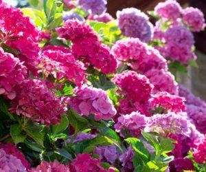 fleurs luxuriante plante